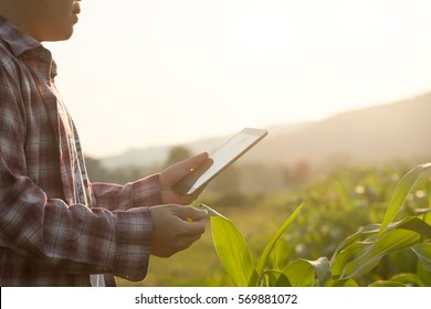 Agronomist Using a Tablet for read a report on the agriculture Field with copy space and vintage tone with selective focus,agriculture technology concept for a industrial.