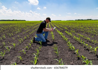 Agronomist Using Technology in Agricultural Corn Field