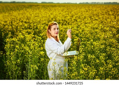 Agronomist woman or farmer examine blossoming rape (canola) field using notebook