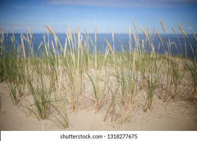 Agrostis capillaris (common bent) growing on Parnidis sand dune - popular tourist point in Lithuania. Located in Nida, in Curonian Spit land strip between curonian lagoon and baltic sea. Unesco site