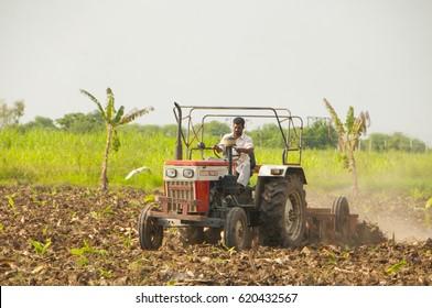 AHMEDABAD, GUJARAT, INDIA, 8 OCTOBER 2015 : Unidentified  farmer working in the banana plantation. An Indian farming scene.