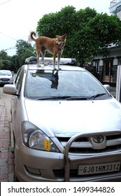 Ahmedabad; Gujarat; India - Asia : Aug. 2019 : Street Dog standing on top of car  Ahmedabad