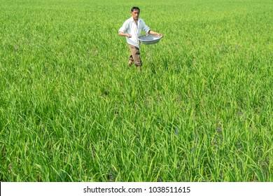 Ahmedabad,Gujarat,India 4-Mar-2018. Photo of farmer in busy in spreading over fertilizer in paddy farm Village Thol, Near Ahmedabad city of Gujarat, India.