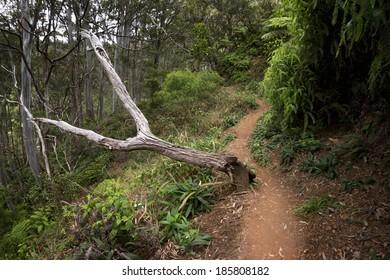 Aiea Ridge Loop hiking trail, island of Oahu, Hawaii