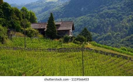 Aigle vineyard in Alps at Switzerland Swiss