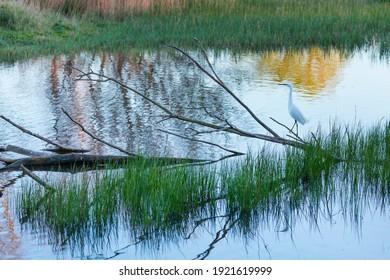 Aiguamolls de l'Emporda Natural Park in Gulf of Roses of Alt Emporda area within Emporda region of Girona province in Catalonia in Spain, Europe - Shutterstock ID 1921619999