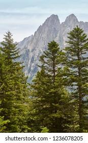 Aigues tortes national park. Forest and peaks landscape. Spain