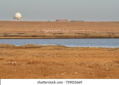Air Defense system radar at Barter Island, Alaska