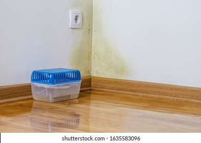 Air filter for water infiltration, moist, damp, leakage and mold infestation. Toxic fungus growing on an interior wall with dehumidifier next to it.