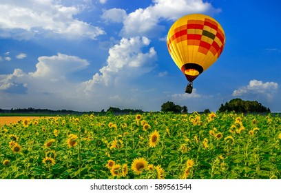 Air flight over the plantation sunflowers.