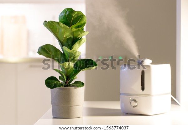 Air humidifier on the table at home, water steam direction to a houseplant - Ficus lyrata. Ultrasonic technology, comfortable living conditions, moisture increase in the apartment.