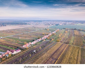 Up in the air with panaromatic picture above the vineyard with autumn mood with dramatic orange color