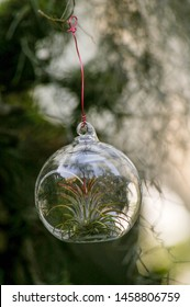 air plant terrarium , beautyfull decoration indoor garden