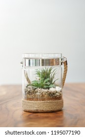 Air plant and terrarium. The terrarium plant with cactus inside is isolated on the wooden table. White background copy space.