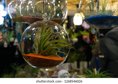 Air plant in terrarium globe clear glass for indoor home decor