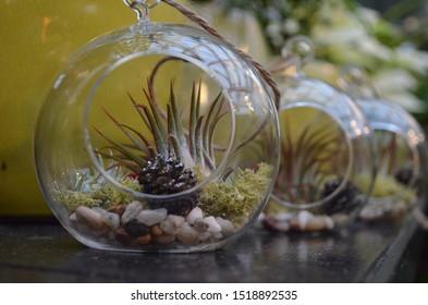 Air plants inside a glass terrarium