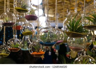 Air plants in terrarium globe clear glass for indoor home decor