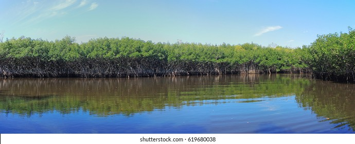 Airboat tour of the Florida Everglades Mangrove Jungles