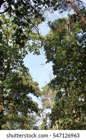 An airplane flies above a forest. The picture creates a contrast between nature and technology.