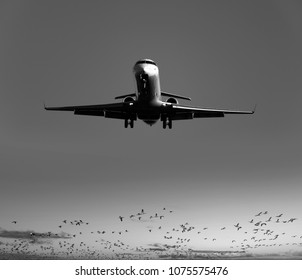 Airplane with a flock of birds in the back
