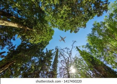 Airplane flying above the forest, bottom view