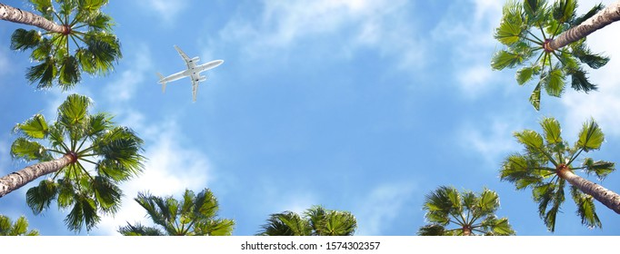 Airplane flying above the palm trees.