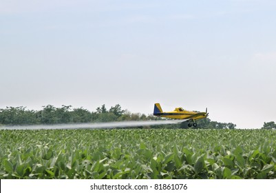 Airplane flying low over a cornfield applying pesticide
