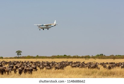 The airplane is flying over the African savanna. There is a huge herd of wildebeest in the savanna under the plane. Photo was taken on short distance and with excellent light.