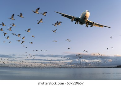 Airplane, jet aircraft before landing with a flock of birds in the back
