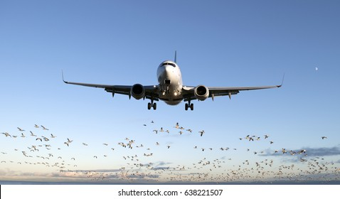 Airplane jet aircraft before landing with a flock of birds in the back