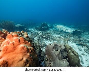 Airplane wreck in coral reef around Curaçao - Caribbean Sea - Dutch Antilles
