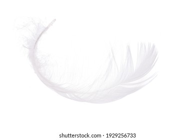 airy light swan feather on a white background