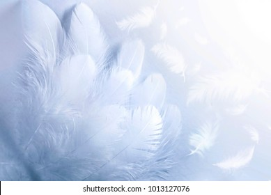 Airy soft fluffy white feathers close-up of macro pastel blue shades on white background, soft focus. Abstract gentle natural background. Texture bird feather with copy space.