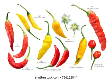 Aji chilly peppers (Capsicum baccatum) collection. Clipping paths for each