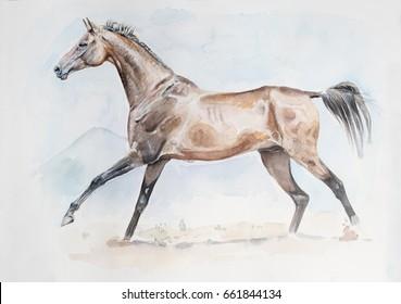 akhal-teke horse watercolor painting