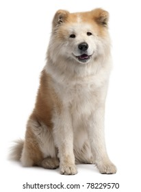 Akita Inu, 4 years old, sitting in front of white background