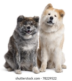 Akita Inu, 7 years old and 4 years old, sitting in front of white background