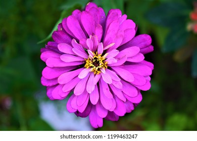 Akshat photograpy beautiful flowers