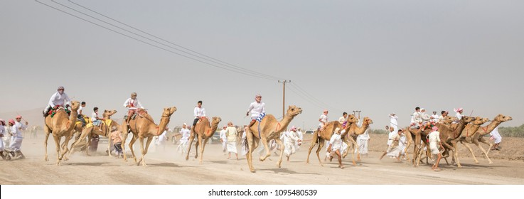 Al Safen, Oman, 27th April, 2018: omani men racing their camels in a countryside