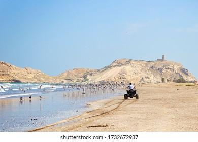 Al Sawadi Beach, Oman. Circa February, 2020. A quad bike rider rides along the beach waves as seagulls take flight from the beach sand.