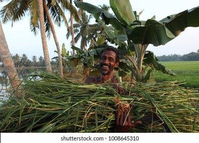 Alappuzha, Kerala, India - January 26, 2011: A Happy Indian farmer carrying a bunch of Indian paddy from the paddy field in Kerala.