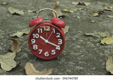 Alarm clock with dry leaves