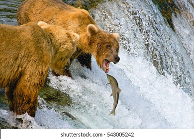 Alaska, bears fish.