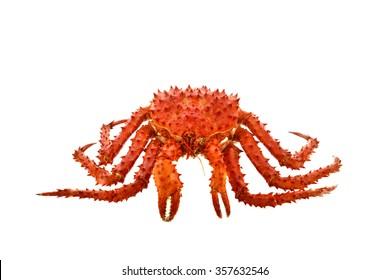 Alaska Crab big isolated on white background .