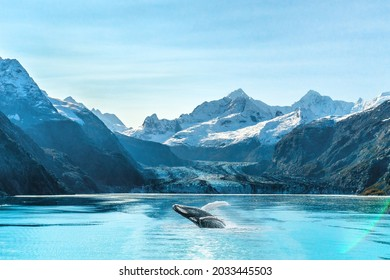 Alaska cruise travel Glacier Bay vacation. Whale watching tour concept for USA holiday destination.