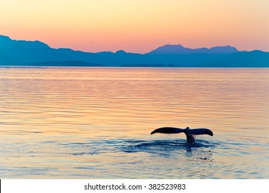 Alaska Whale Tail Sunset