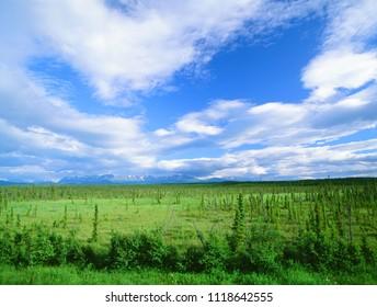 Alaska wilderness with mountains
