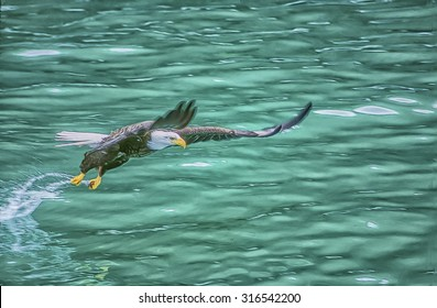 Alaskan bald eagle swooping for fish,digital oil painting