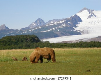 Alaskan brown bears, katmai