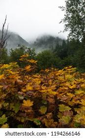 Alaskan forest in September